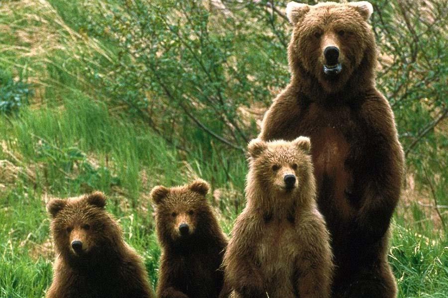 medvediczy-i-medvezhata.jpg